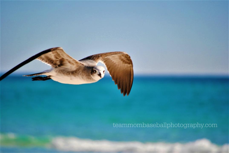 seagulllooking