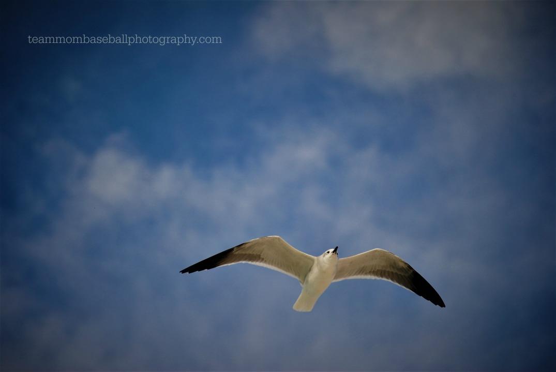 seagullsky