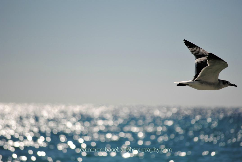 seagullwater