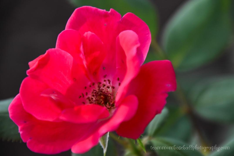 Pretty FlowersWM-3