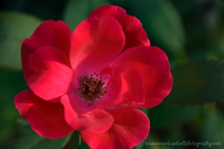Pretty FlowersWM-7