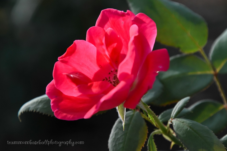 Pretty FlowersWM