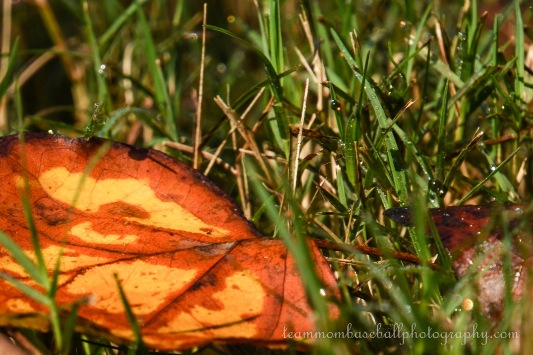 Fall Leaves-4