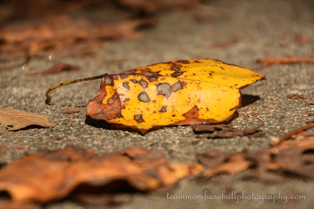 Fall Leaves-5