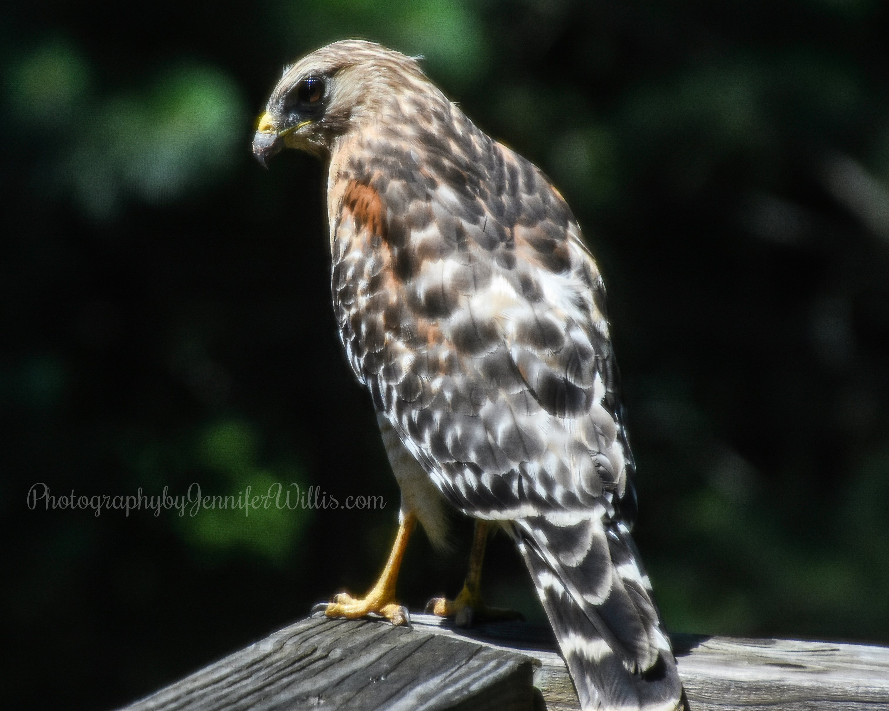 Hawk-WM